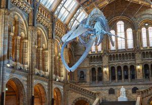 Natural History Museum Visit – Year 3 @ Natural History Museum | England | United Kingdom