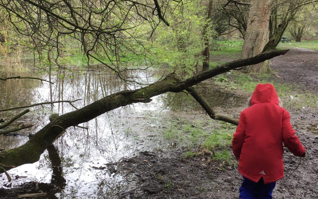 Going Wild in Clapham Woods!